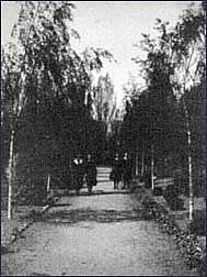 Girls strolling down silver birches pathway, c. 1935