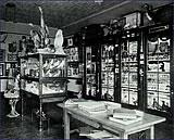 Museum, c. 1950